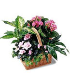 Finland Flower Finland Florist  Finland  Flowers shop Finland flower delivery online  :Pink Assortment  garden