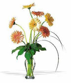 Greece Contemporary Collection Greece,:Grand Gerberas
