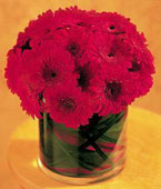 Sweden Contemporary Collection Sweden,:Red Gerbera Collection