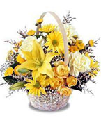 Virgin Islands Flower Virgin Islands Florist  Virgin Islands  Flowers shop Virgin Islands flower delivery online :Time To Heal