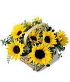 Swiss Get Well Swiss,:Sunflowers Gift Surprise