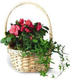 Comoros Flower Comoros Florist  Comoros  Flowers shop Comoros flower delivery online :Small European Garden.