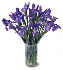 Norway Flowers Norway flower Norway florists :A Nice Blooming Iris