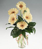 Barbados Mixed Flowers Barbados,:Gerbera daisies bouquet