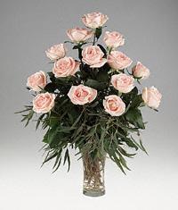 Osiana peach Roses