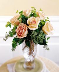 Six Peach  Roses