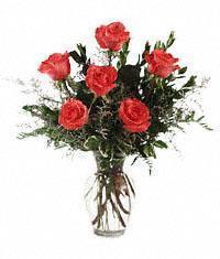 1/2 Dozen Orange  Roses