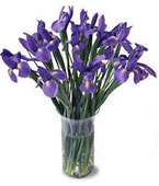Indonesia Spring Bouquets Indonesia,:Irises Bouquet