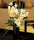 Micronesia Thank You Micronesia,Other State:Artful Orchids