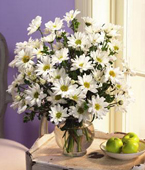 Singapore White Flowers Singapore,:White Daisies bouquet
