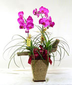 Taiwan Potted Orchids Taiwan,:Minimalistic