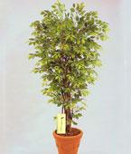 Taiwan Plant Taiwan,:Greenery