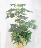Taiwan Plant Taiwan,:Canopy of Greenery