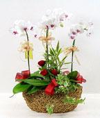 Taiwan Flower Taiwan Florist  Taiwan  Flowers shop Taiwan flower delivery online  :Delicate Beauty