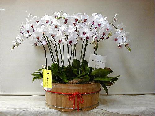 Livraison Fleurs Taiwan fleuriste Taiwan,fleurs de Taiwan Livraison fleurs Taiwan:LocalStreets:Luxurious Beauty