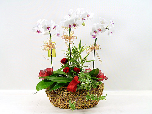 Livraison Fleurs Taiwan fleuriste Taiwan,fleurs de Taiwan Livraison fleurs Taiwan:LocalStreets:Delicate Beauty