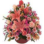 UAE Flower UAE Florist  UAE  Flowers shop UAE flower delivery online  :Love Surprise!