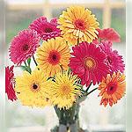 UAE Bouquets UAE,:Sunshine