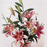 UAE Bouquets UAE,:Stargazer Lilies