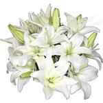 UAE Bouquets UAE,:Sweet Angel