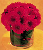 Montreal Birthday Montreal,Québec,:Red Gerbera Collection