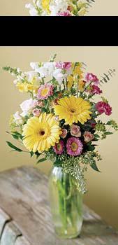 Livraison Fleurs Canada fleuriste Canada,fleurs de Canada Livraison fleurs Canada:LocalStreets:The FTD?Birthday Cheer