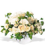 Canada Flower Canada Florist  Canada  Flowers shop Canada flower delivery online  ,:Simply White