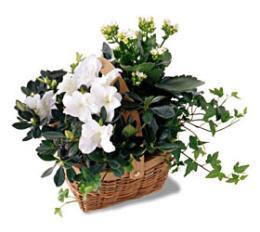 Livraison Fleurs Canada fleuriste Canada,fleurs de Canada Livraison fleurs Canada:LocalStreets:The FTD?White Assortment Basket